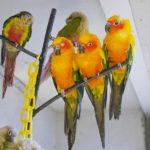 浅草の「鳥のいるカフェ」でインコに囲まれる!どんなコトリがいる?料金は?