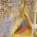 インコがバードテントに入らない?作る前に布の色と柄をチェック!!