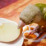 インコはリンゴが大好き?!でもリンゴのあの部分には毒がある!!