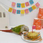 インコの誕生日を手作りバードブレッドでお祝い!小鳥のおやつ