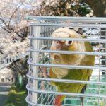 実はとっても重要だった!インコ・小鳥の日光浴の必要性